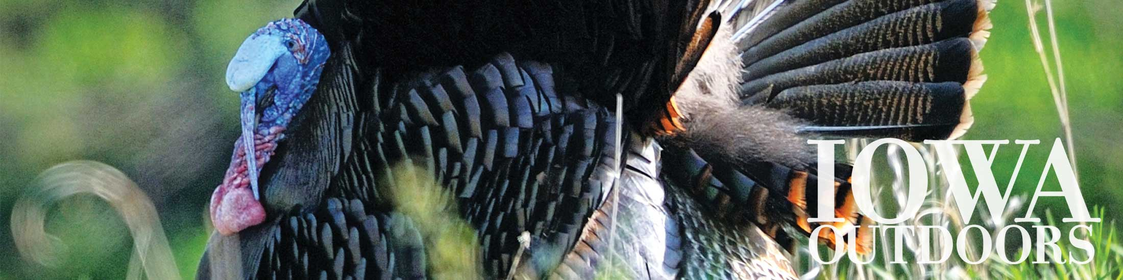 turkey Iowa Outdoors magazine