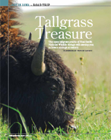 Tallgrass Treasure