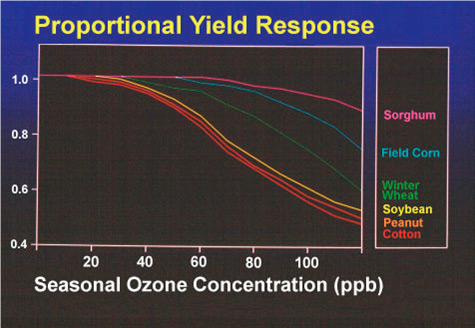 Chart depicted yield response of various crops due to seasonal ozone levels