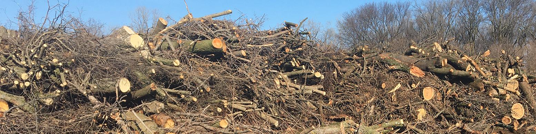 tree dump pile
