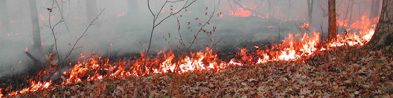 Forest Fire, burn