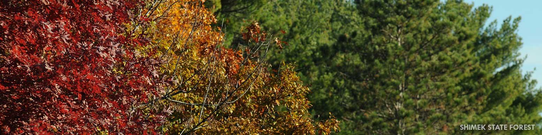Shimek State Forest
