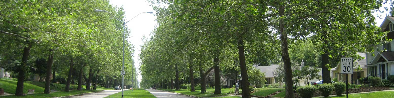 Urban Forestry, image of a street lined with trees
