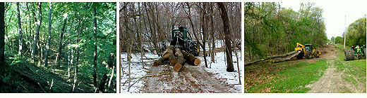 EAB woodland photos