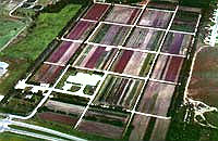 aerial view of nursery
