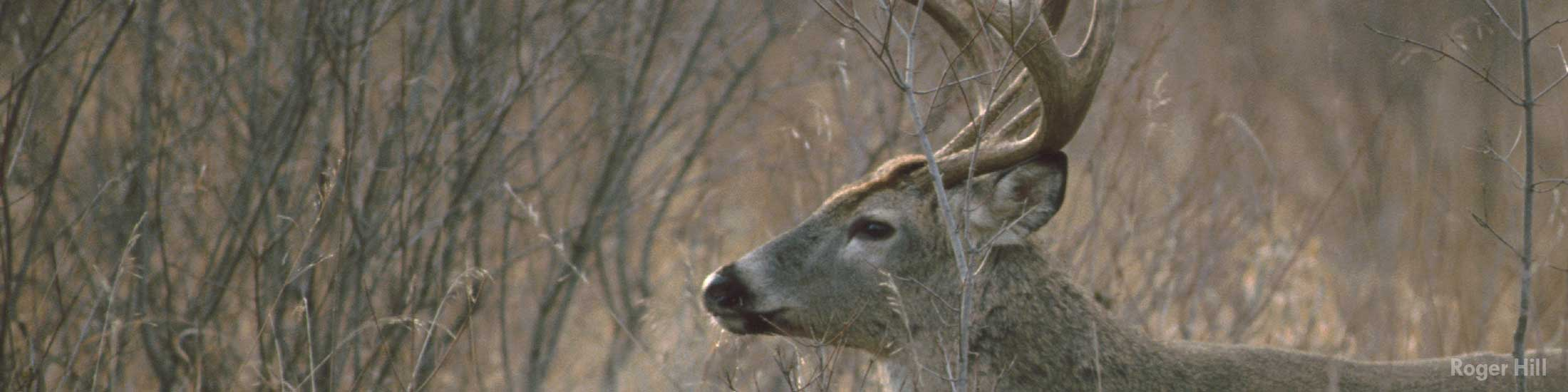 Applications for iowa hunting and wildlife licenses for Iowa fishing regulations