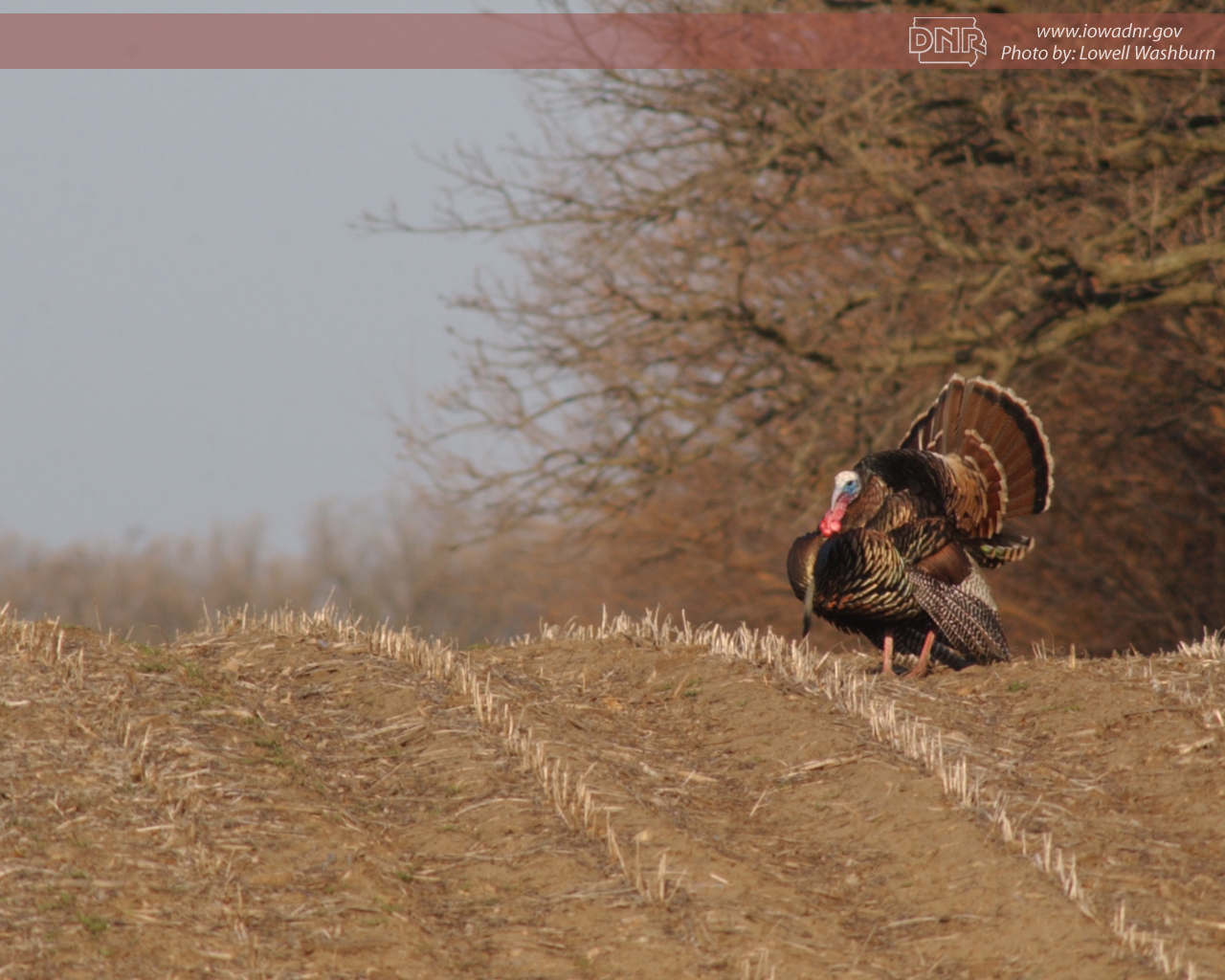 pics photos hunting wallpaper turkey hunting backgrounds