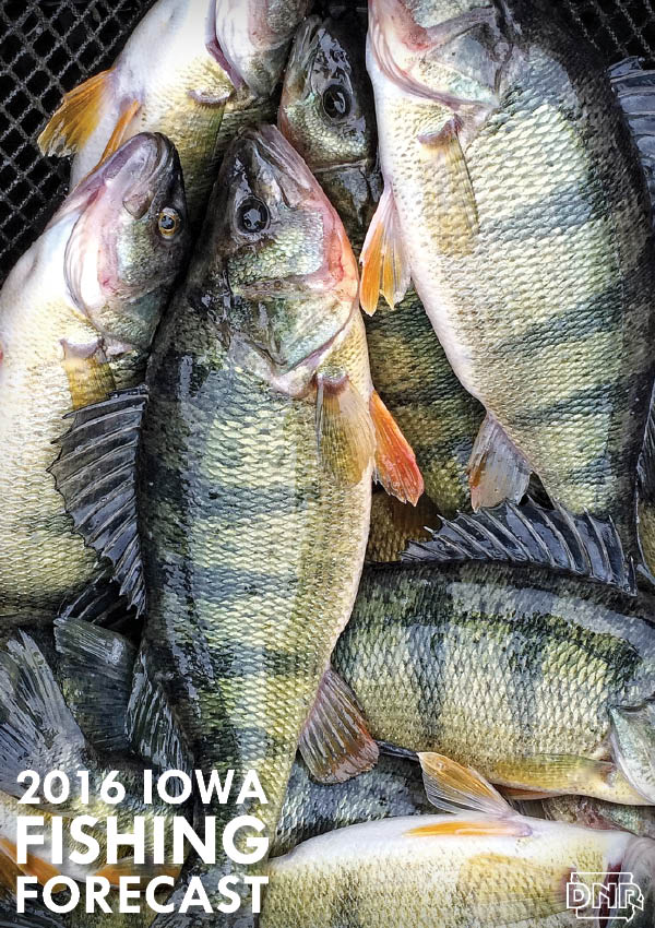 2016 Fishing Forecast for Twelve Mile Lake and all 99 Iowa counties | Iowa Outdoors Magazine