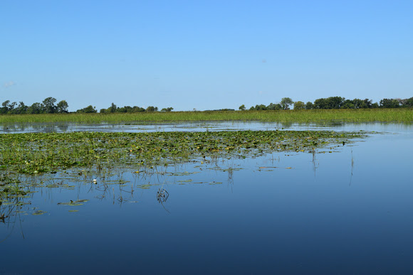 This natural wetland in north central Iowa is unlike anywhere else.  | Iowa DNR