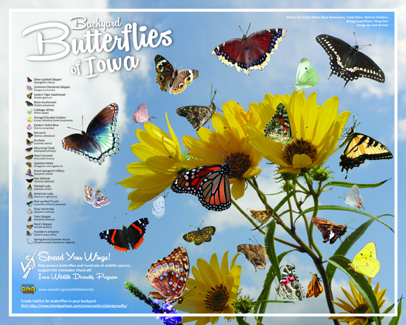 Proceeds from this butterfly poster help support nongame wildlife efforts in Iowa! | IowaDNR