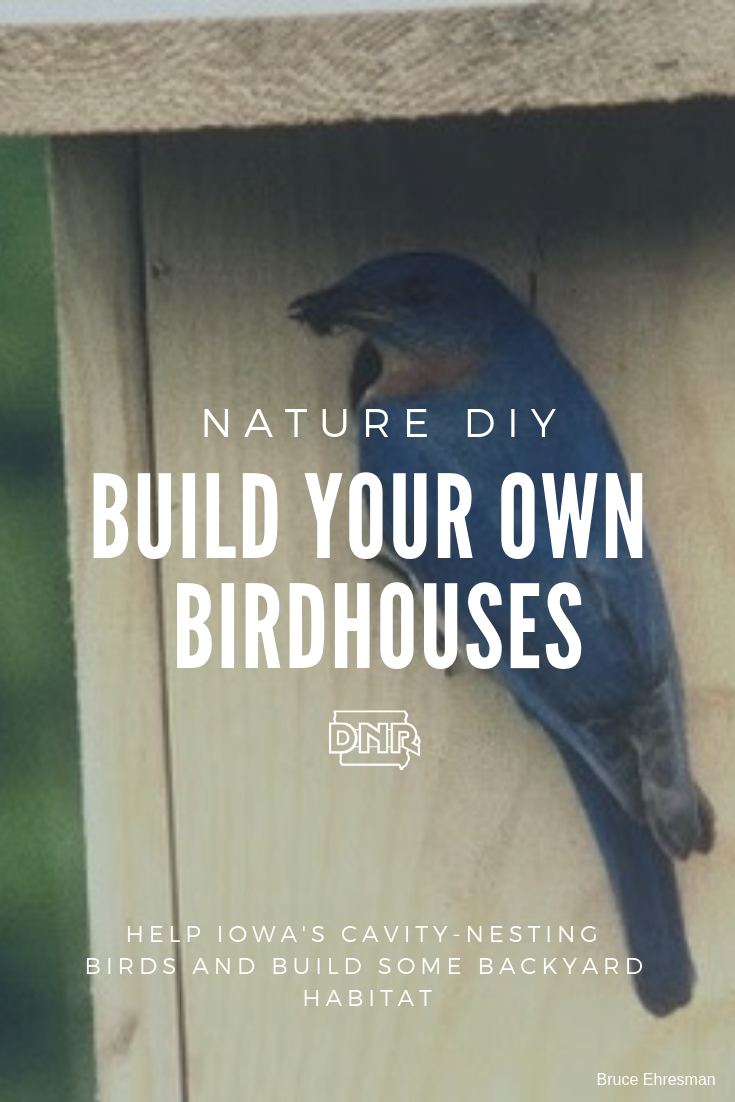 Help out your feathered friends with a DIY birdhouse or two!  |  Iowa DNR