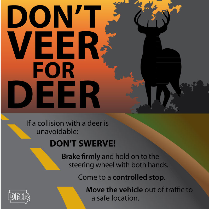 Drivers Stay Alert As Deer Activity Increases Dnr News
