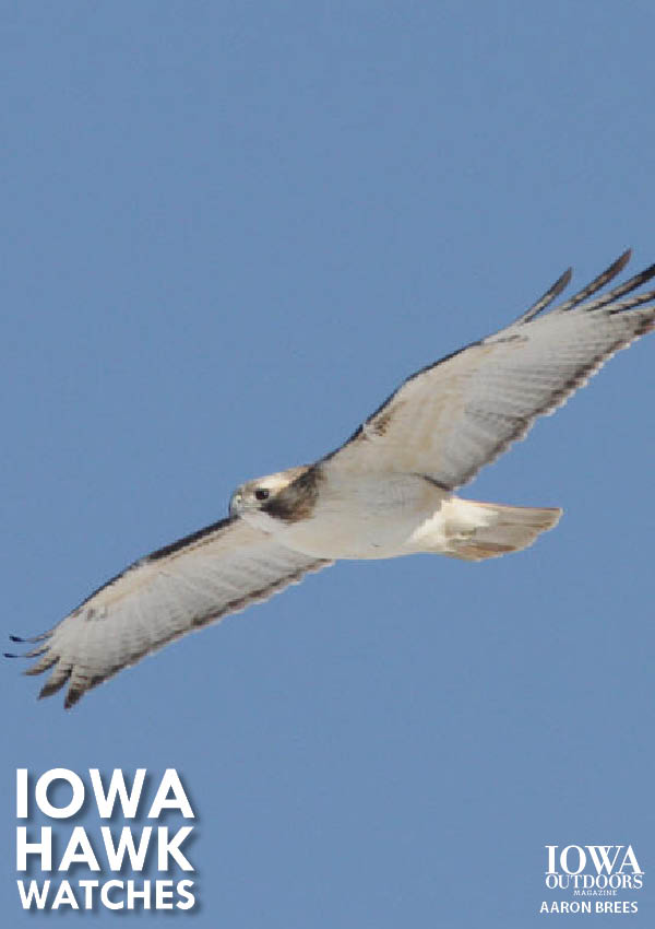 Fall is when birds of prey migrate. Attend a Hawk Watch Event to see and learn about fascinating raptors. | Iowa Outdoors magazine