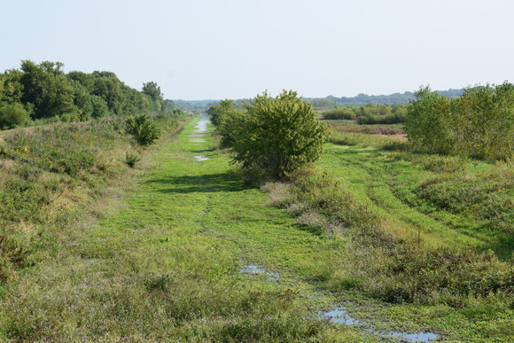 Looking northeast on the Jensen tract of the Riverton Wildlife Area as water fills the marsh on Sept. 13. Given the large amount of smartweed available, state wildlife experts predict this area is set up for a good duck season. | Iowa DNR