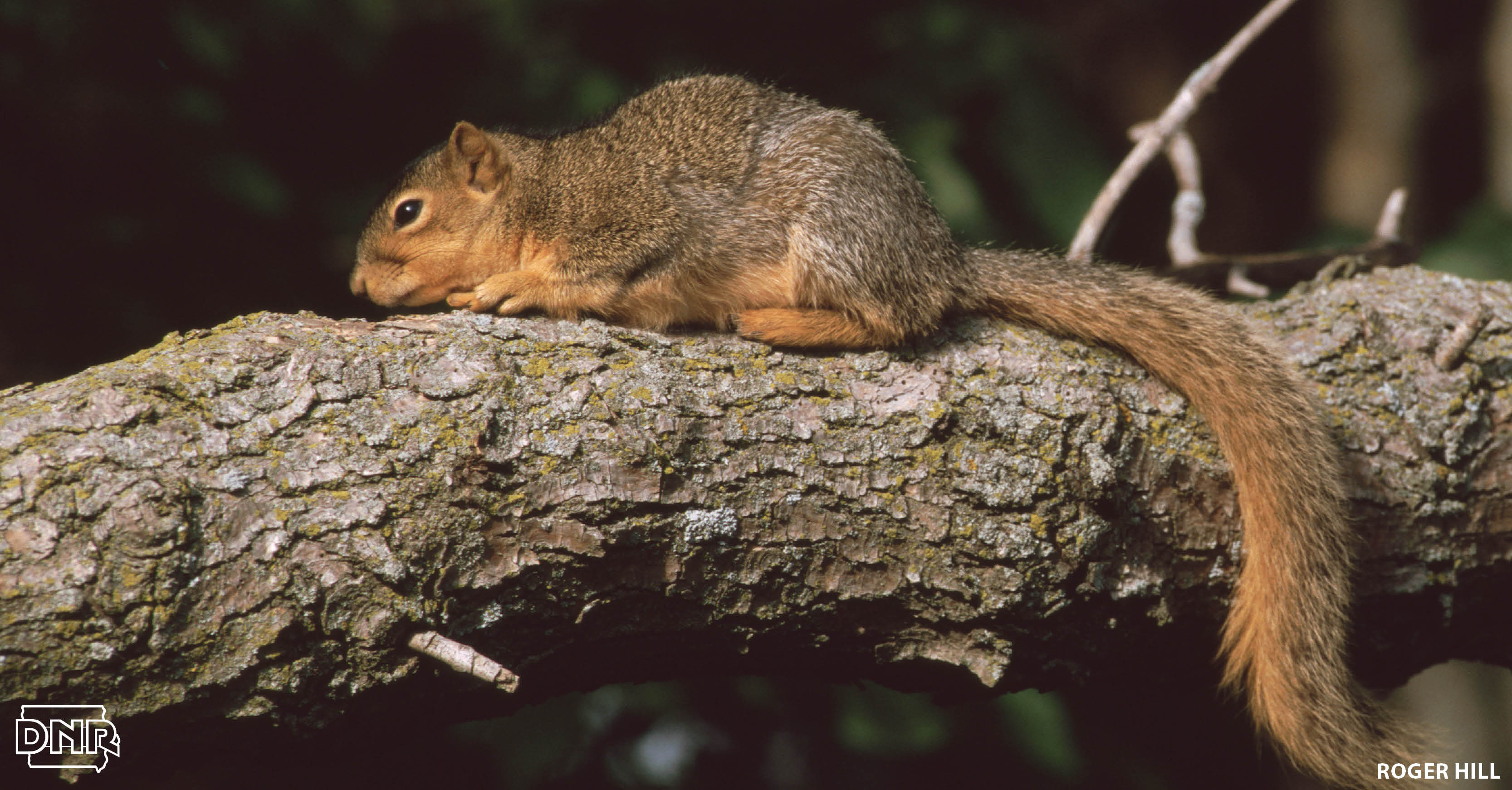 7 cool things you should know about squirrels | Iowa DNR