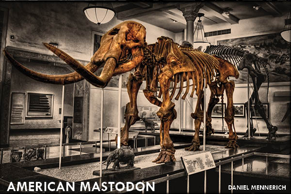 11 Extinct Animals You Didn't Know Were Iowan: American mastodon | Iowa DNR  1