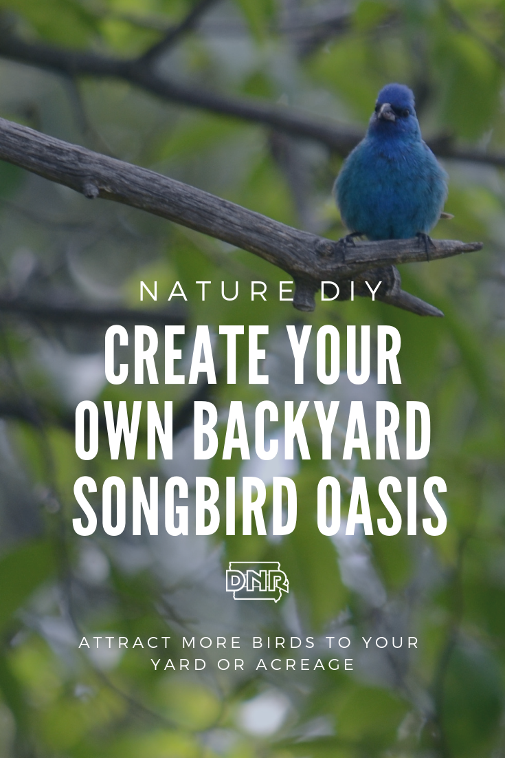 Create your own backyard or acreage oasis for songbirds  |  Iowa DNR