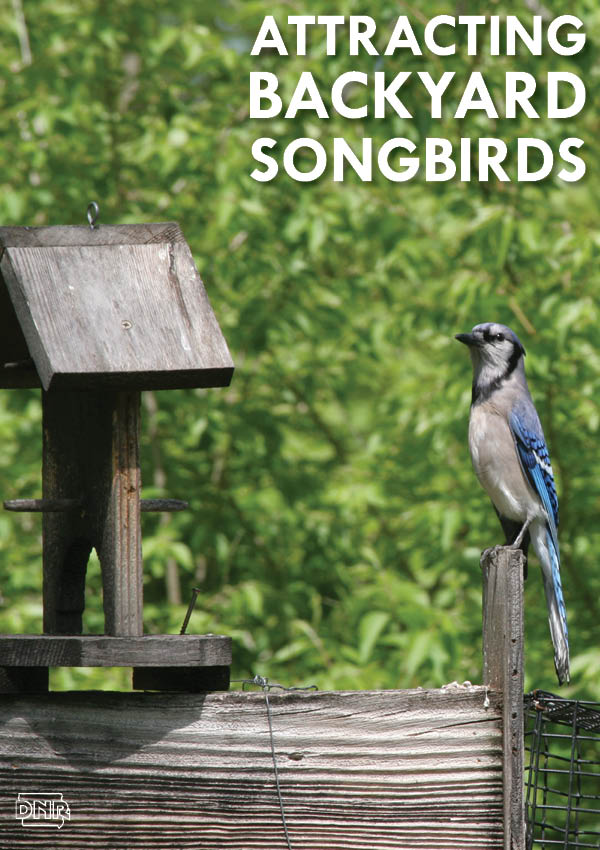 7 ways to attract songbirds to your yard | Iowa DNR