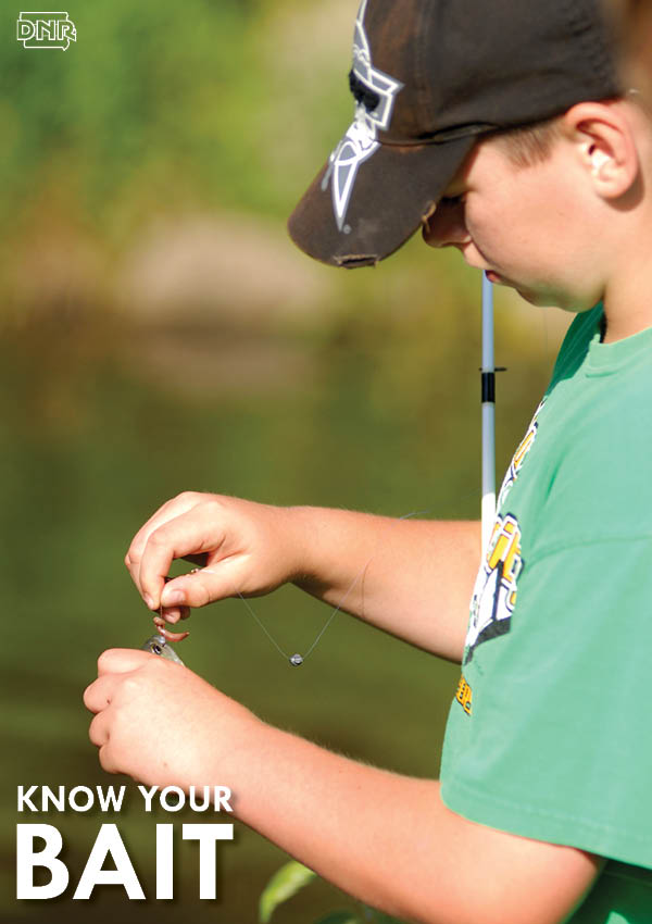 Know which kinds of bait are legal when fishing in Iowa | Iowa DNR