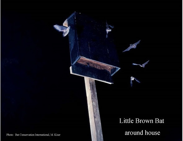 Give bats a place to stay outside your attic (so they can eat a ton of bugs!) with a bat house | Iowa DNR