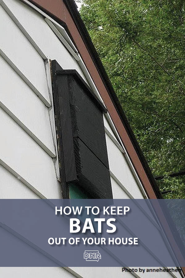 Bats are great neighbors - think of all those insects they eat for you - but not roommates. Here's how to give bats their own proper home in your yard but not your house.| Iowa DNR