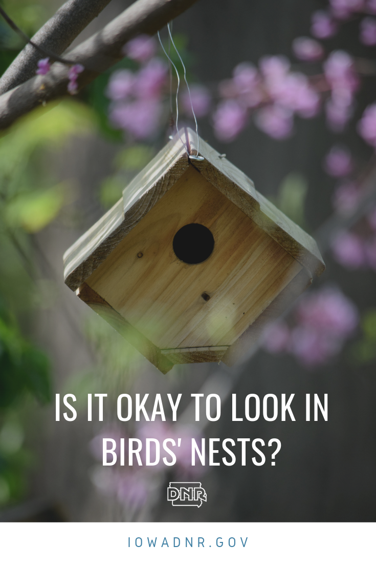 Is it okay to look in birds' nests or birdhouses?  |  Iowa DNR