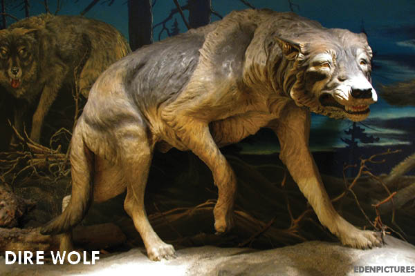 11 Extinct Animals You Didn't Know Were Iowan: Dire wolf | Iowa DNR