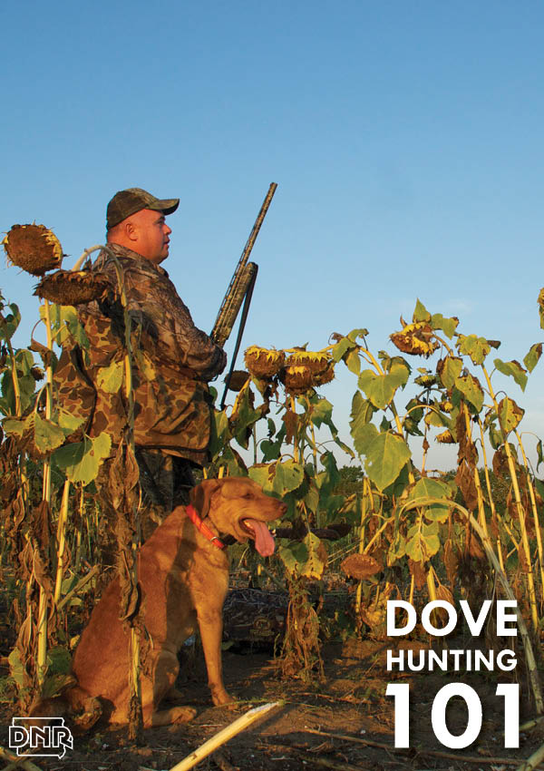 Dove hunting 101: six tips for a successful season | Iowa DNR