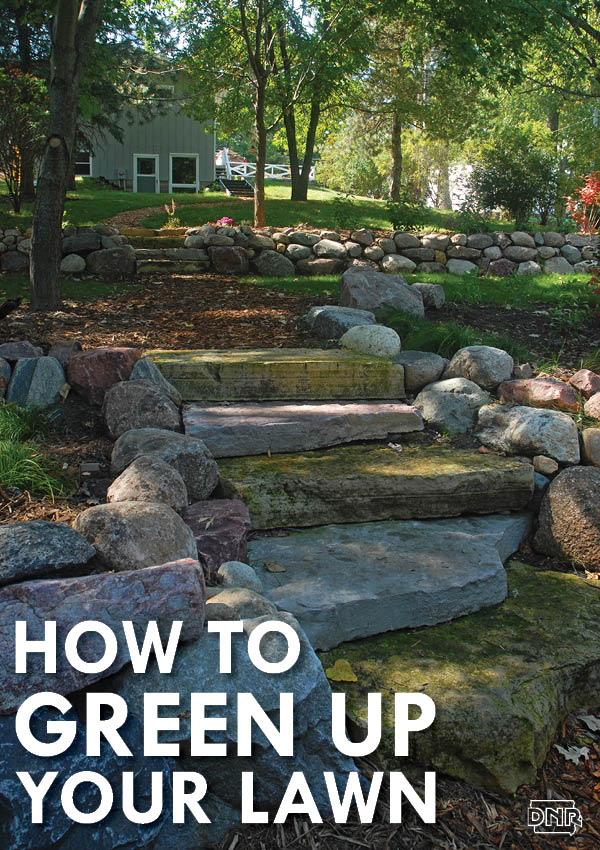 Tips for greening up your lawn care to help the environment (and save you money) | Iowa DNR