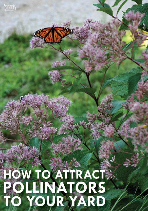 Bee Beautiful: 5 Tips to Attract Pollinators to Your Backyard | Iowa DNR