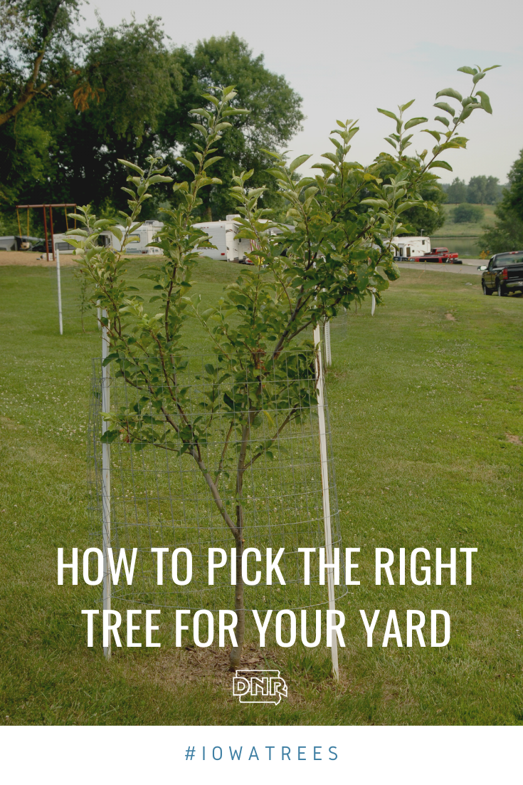 Keep these five things in mind when adding new trees to your yard or property  |  Iowa DNR