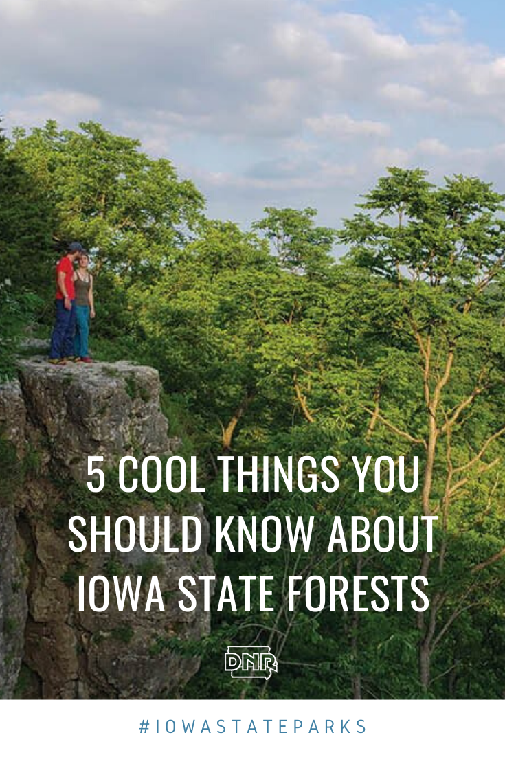 Do you know these cool facts about Iowa's state forests?  |  Iowa DNR