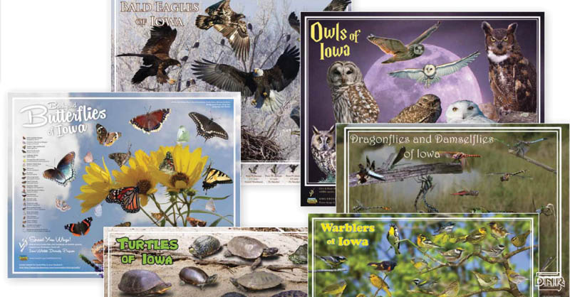Posters of Iowa's wildlife help support birds, reptiles, insects, mammals and amphibians in Iowa! | Iowa DNR