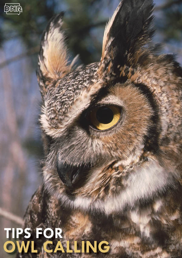 Tips for calling owls this winter from the Iowa DNR and Iowa Outdoors magazine