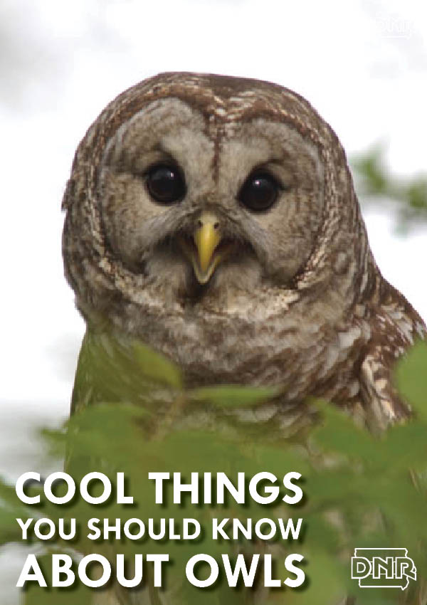 Cool things you should know about owls from the Iowa DNR