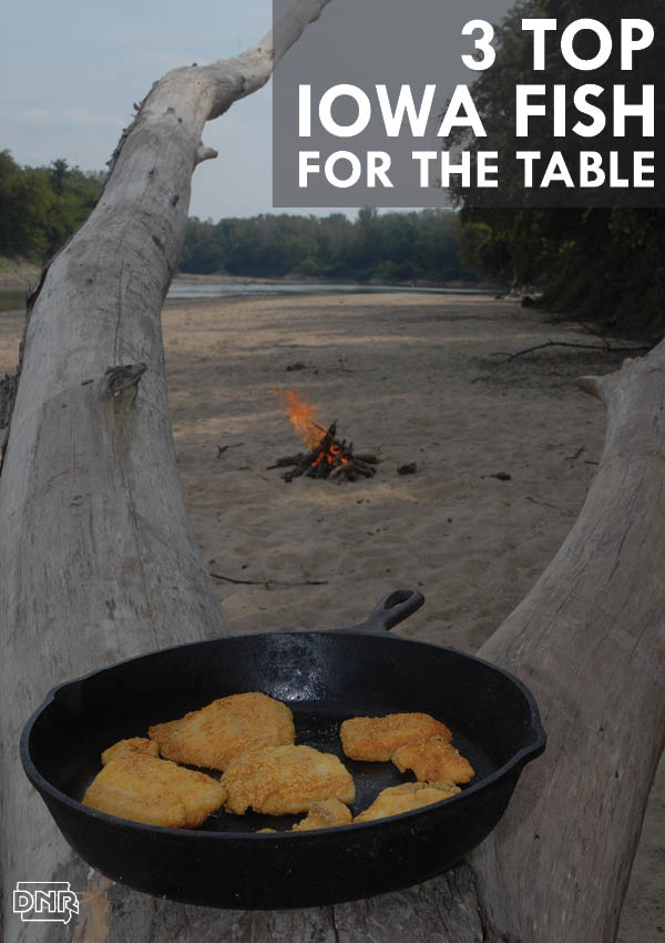 Top fish for the table - with recipes - from the Iowa DNR