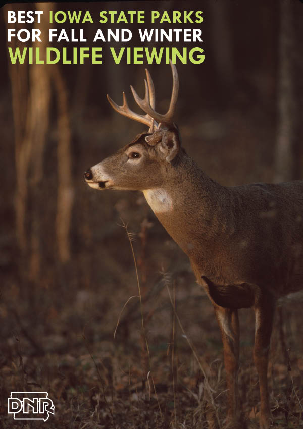 Best Iowa State Parks for fall and winter wildlife viewing from the Iowa DNR