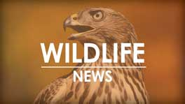 Indian Bluffs and Pictured Rocks wildlife areas to become a bird conservation area