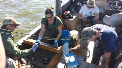 DNR fisheries staff conducting a fish sampling survey.