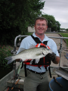 DNR fisheries employee Randy Schultz holds a hybrid striped bass caught during electrofishing.