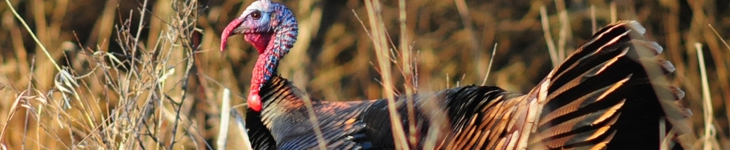 Iowa dnr hunting regulations 2013 for Iowa fishing regulations