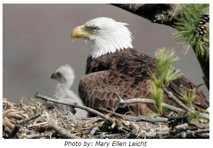 Eagle Nest, Photo by Mary Ellen Leicht