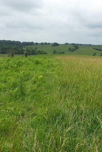 Study Pasture, Ringgold County
