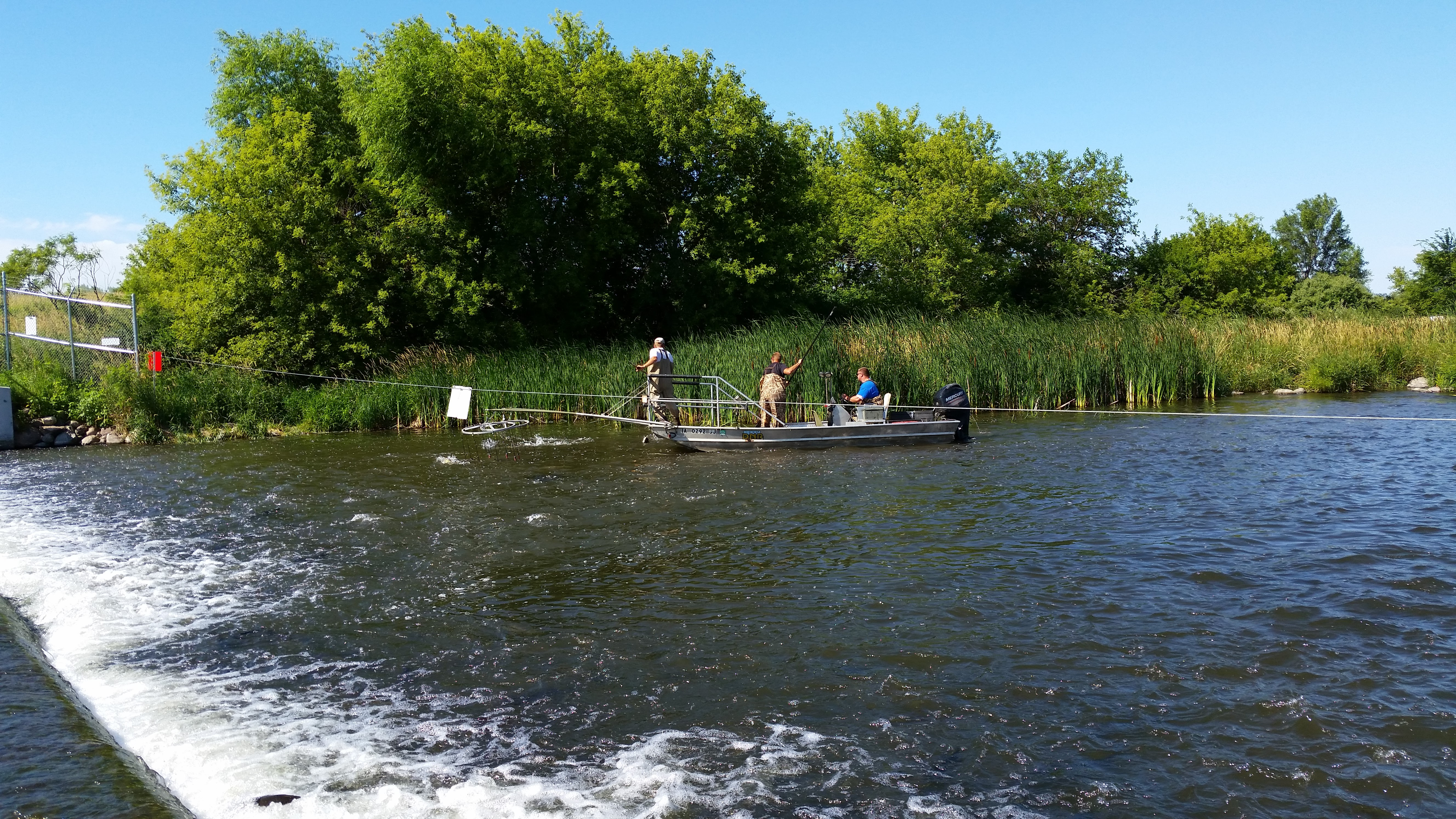 DNR fisheries staff sampling for walleye and muskellunge in the Iowa Great Lakes.