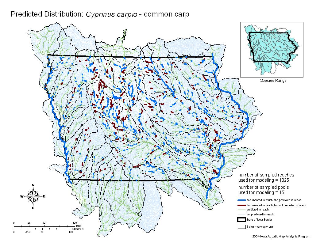Common Carp Distribution