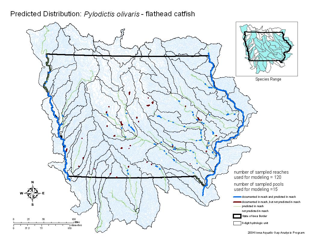 Flathead Catfish Distribution
