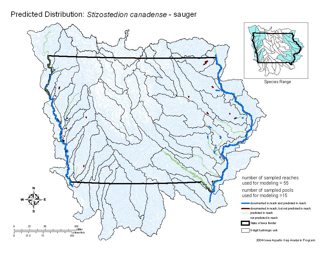 Sauger Distribution