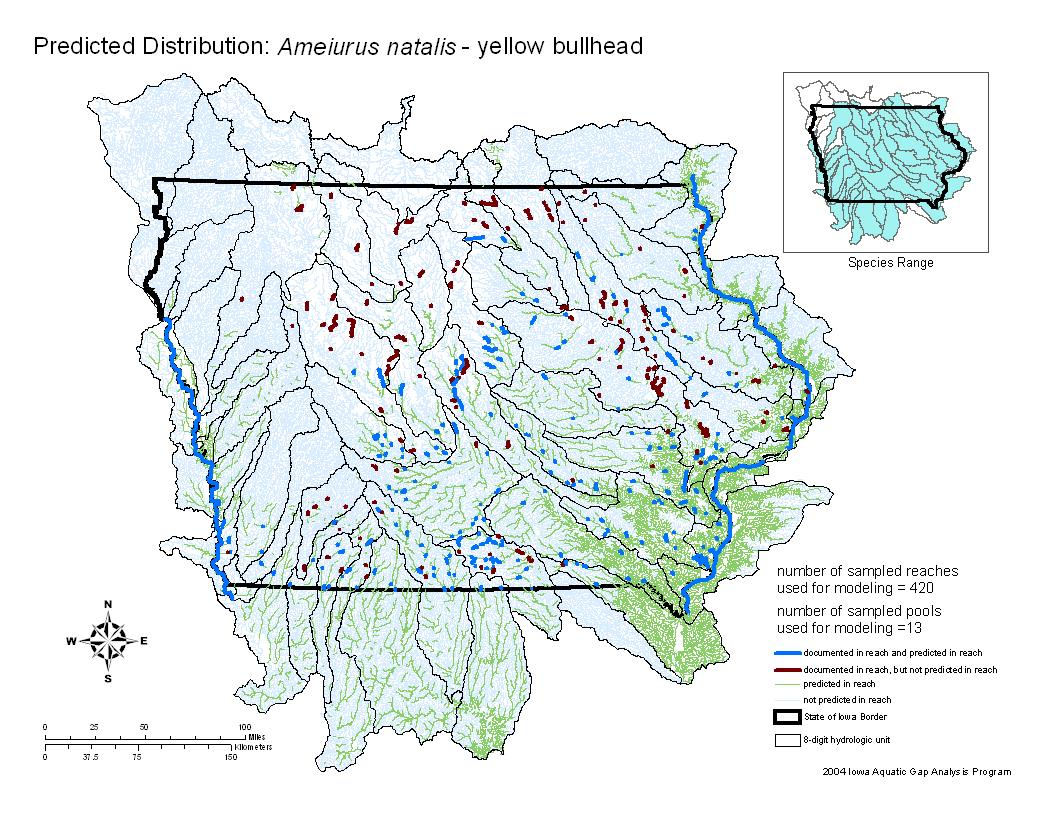 Yellow Bullhead Distribution