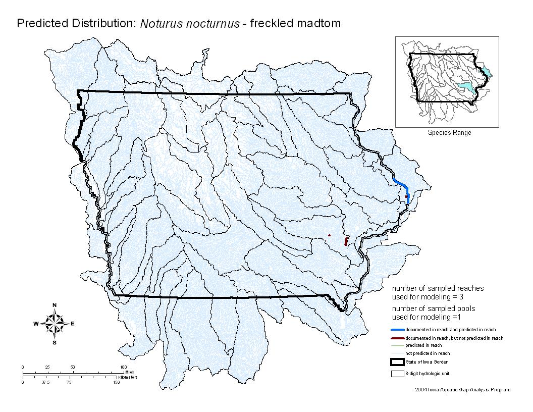 Freckled Madtom Distribution
