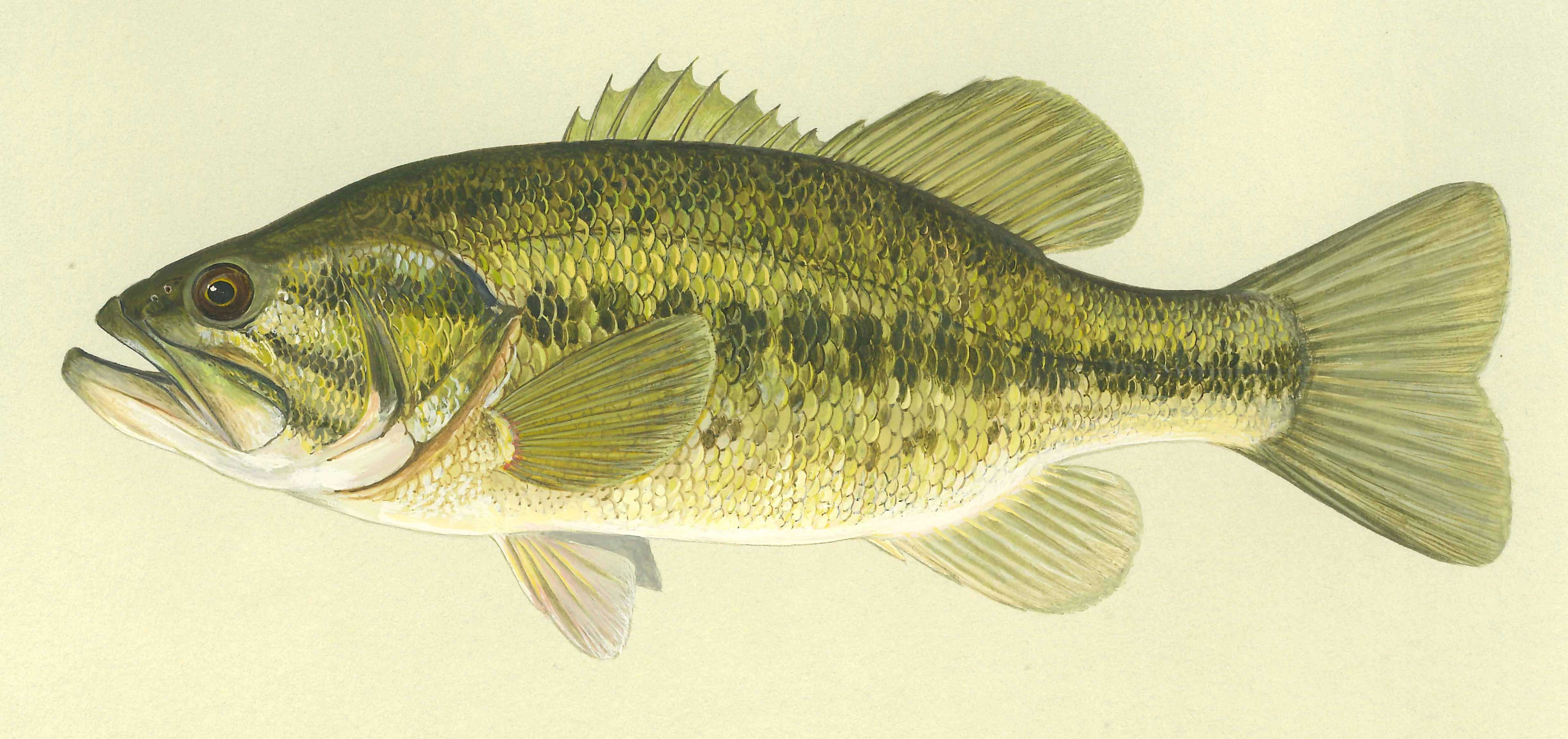 Angler details for Idnr fishing license